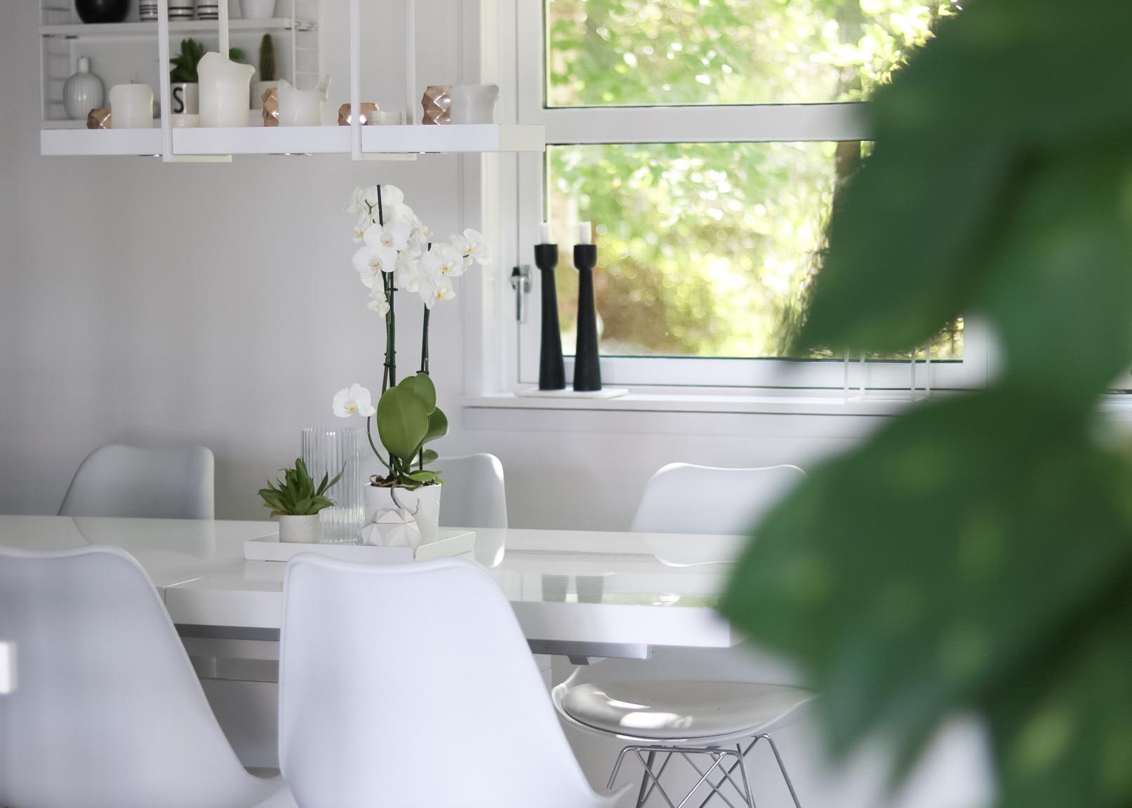 Orkide - hvitelinjer